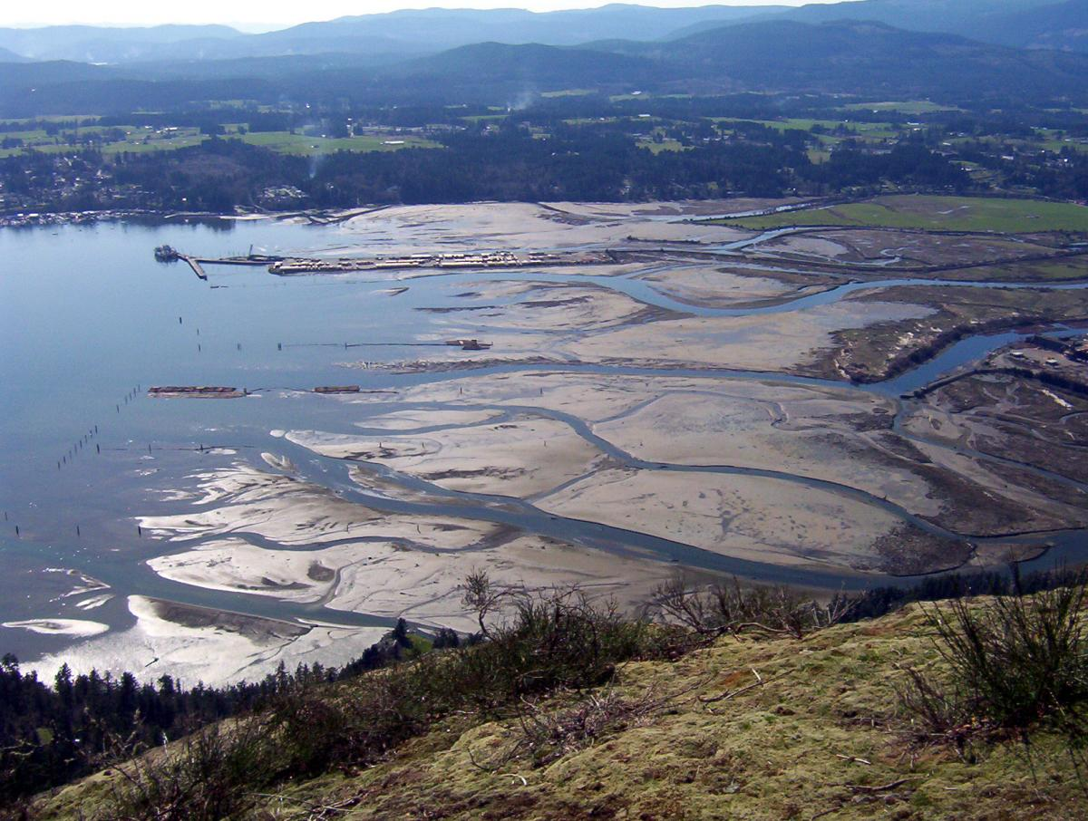 cowichan_estuary_-_pamela_williams_edited