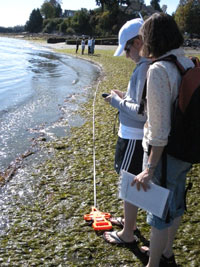 eelgrass-measuring