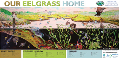 eelgrass-mural_legend